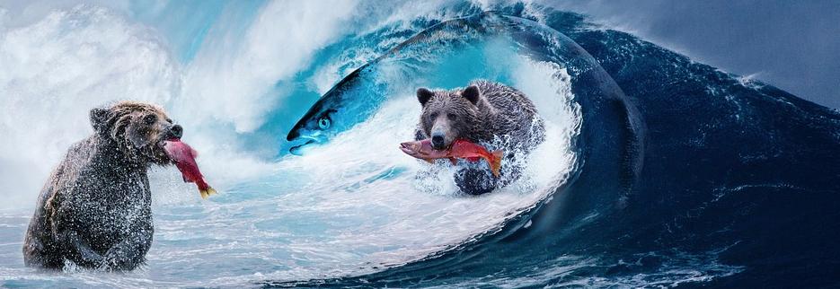 Bears Eating Fish