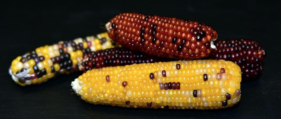 fake corn